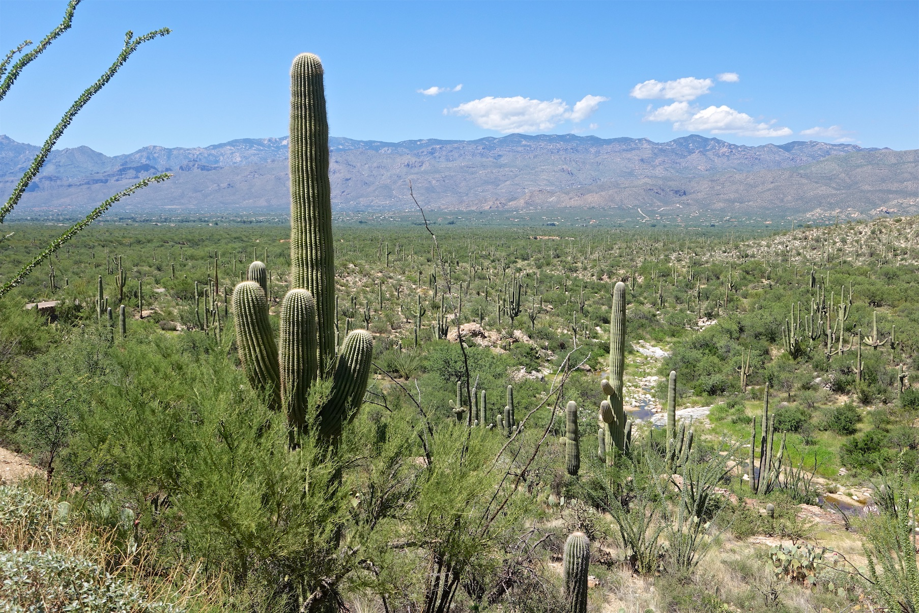 Exploring Saguaro National Park (East) in half a day