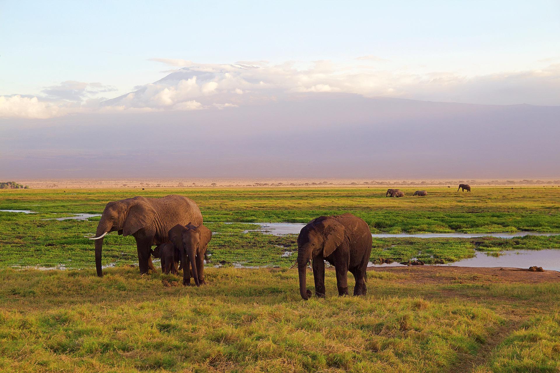 Kenya - Wildlife (Elephants)