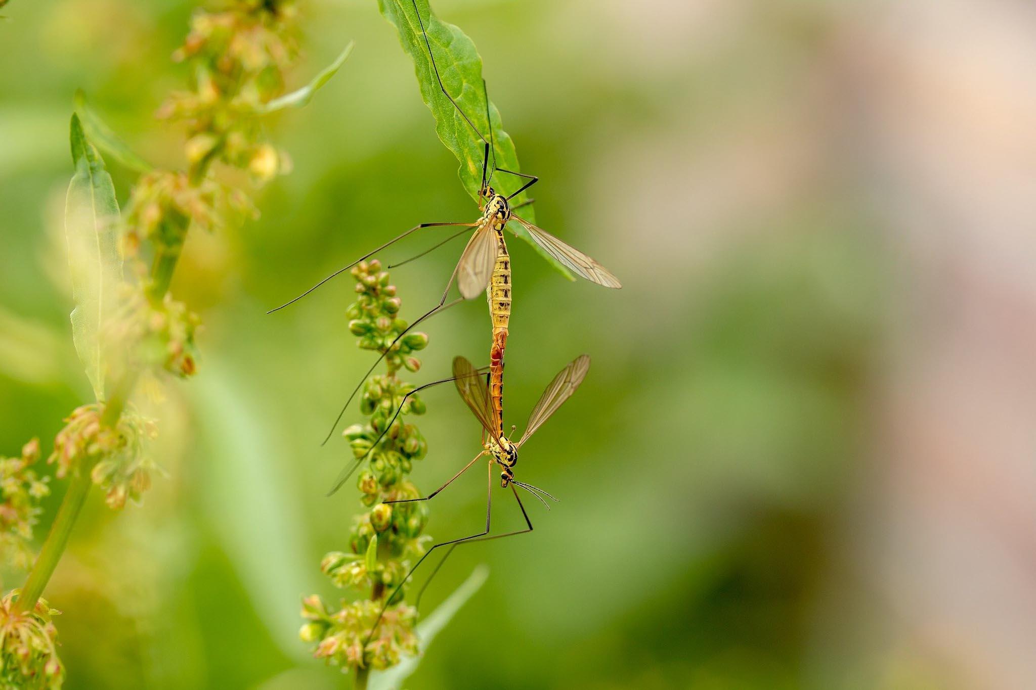 Natürlicher Mückenschutz