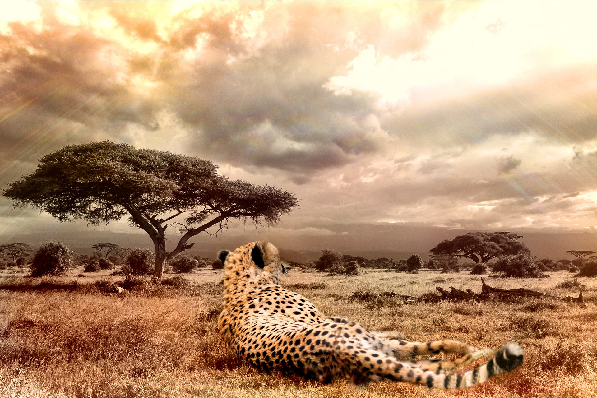 Superlative Wildlife
