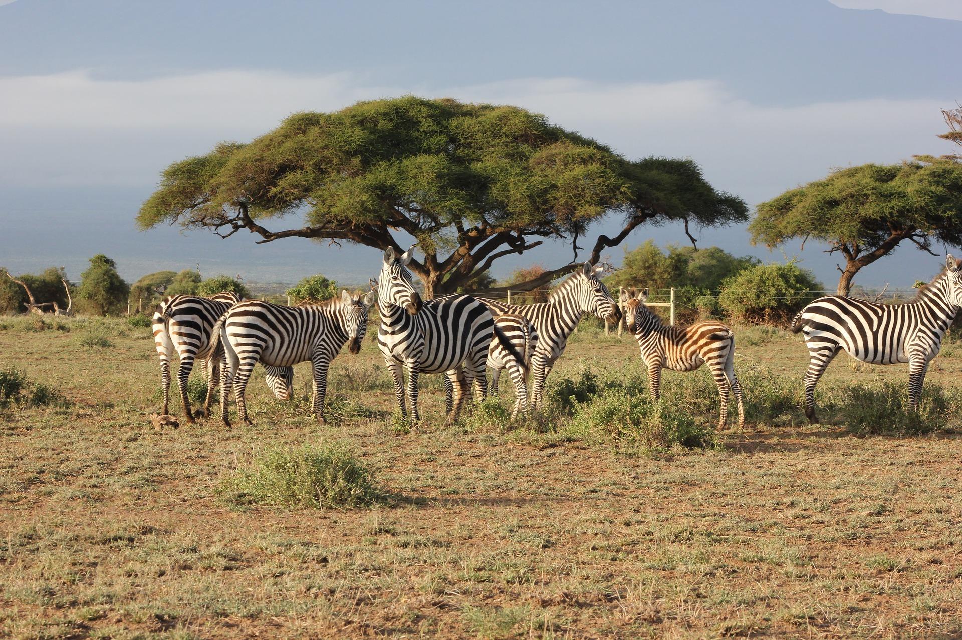 The Maasai Mara, Kenya